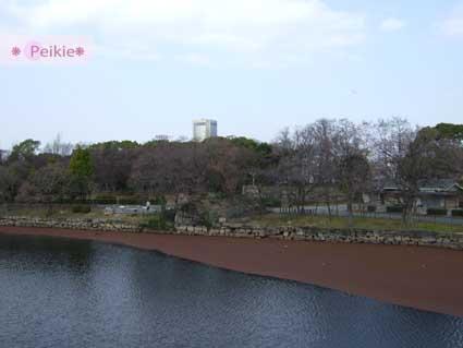 大阪城走出去的護城河,雖然有兩種顏色,但是暗紅色部分好像是樹木掉下來的枯萎果粒