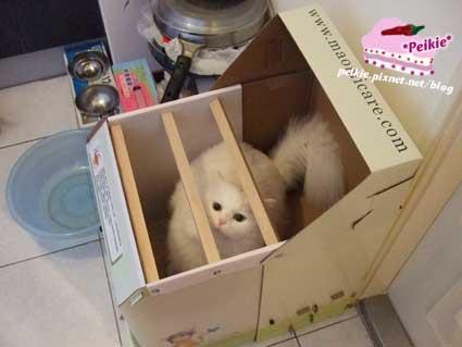 貓砂屋.jpg