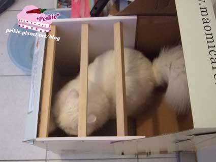 貓砂屋1.jpg