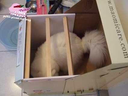貓砂屋2.jpg