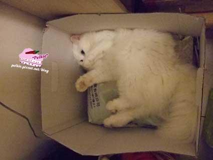 紙箱裡的咩咩.jpg