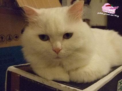 箱子貓1.jpg