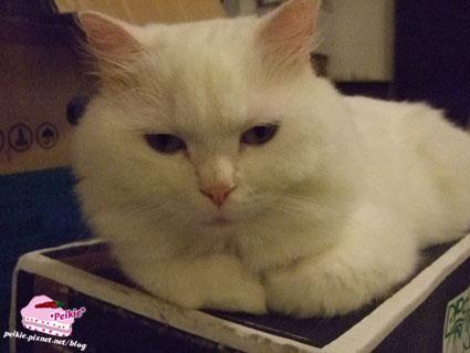 箱子貓2.jpg