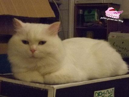 箱子貓3.jpg