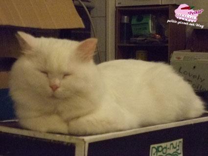 箱子貓4.jpg