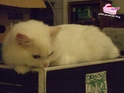 箱子貓5.jpg