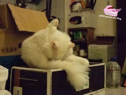 箱子貓8.jpg