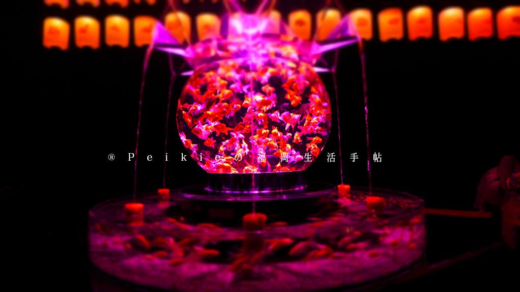 福岡藝術水族箱展。金魚展 アートアクアリウム展