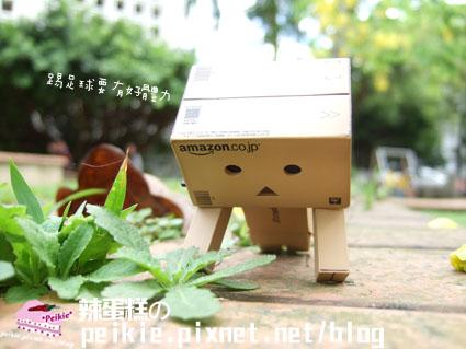 紙箱人流浪記4.jpg