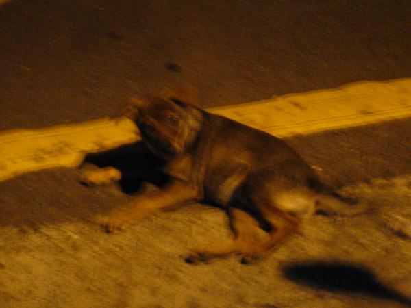 石麗君家樓下的狗.jpg