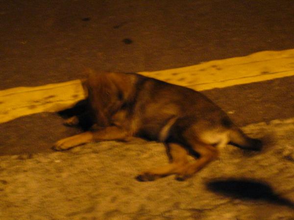 石麗君家樓下的狗 (1).jpg