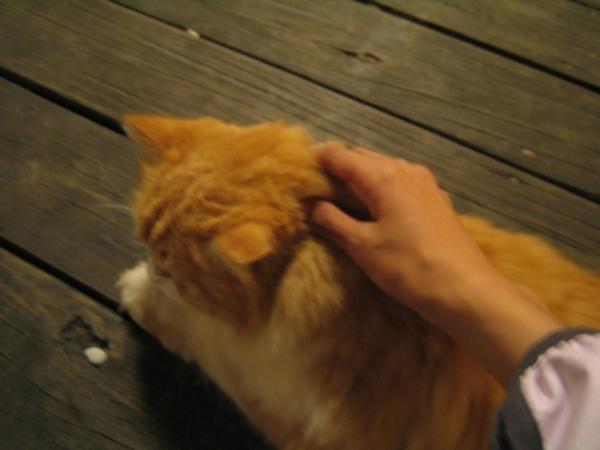 大貓摸起來好舒服喔
