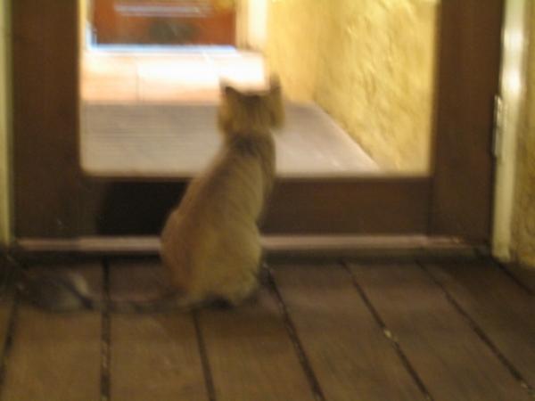 花蓮雙叟的貓