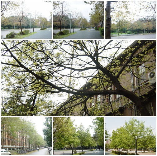 台大校園秋色與立法院前老樹