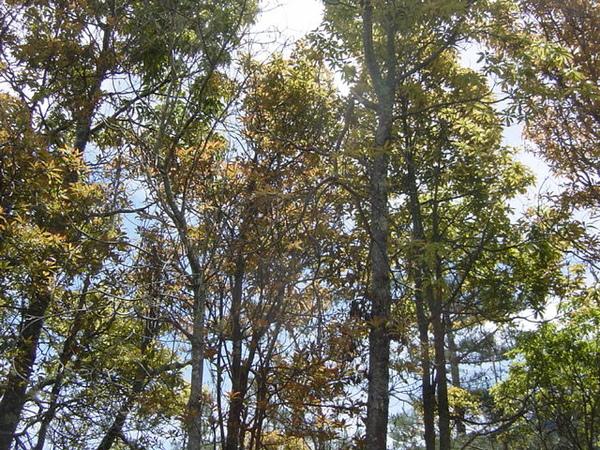 陽光下的林間 (2)
