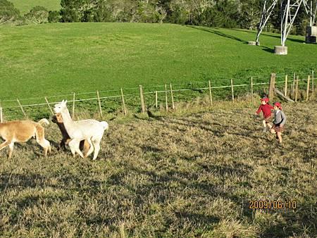 羊羊3.jpg