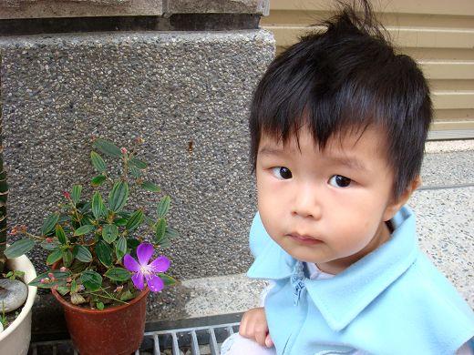 紫牡丹與謙太郎.jpg