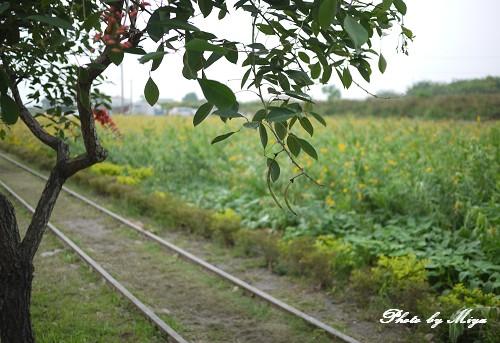板陶窯P1060520.jpg