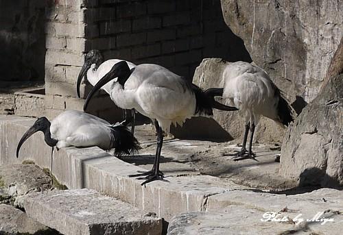 新竹動物園P1040770.jpg