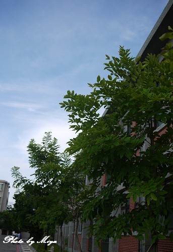 安平樹屋P1010923.jpg