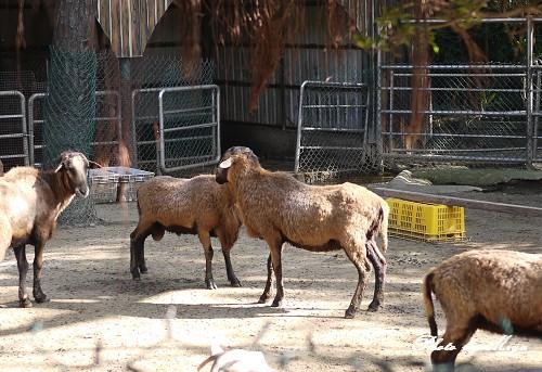 新竹動物園P1040762.jpg