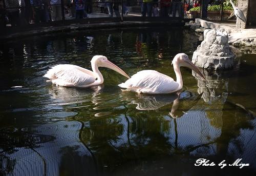 新竹動物園P1040767.jpg