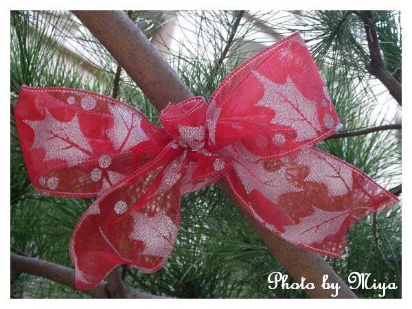 聖誕節SANY0278.jpg
