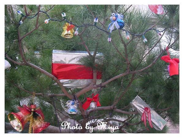 聖誕節SANY0282.jpg