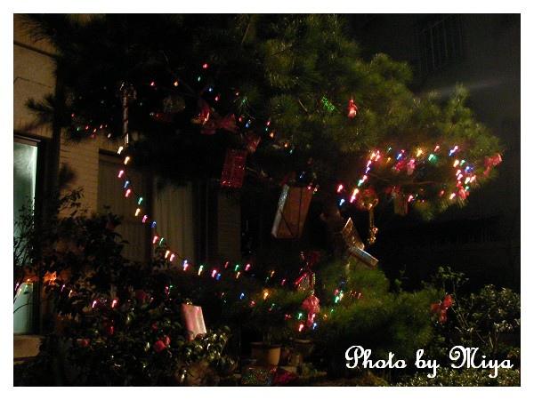 聖誕節SANY0287.jpg