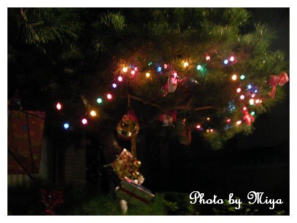 聖誕節SANY0288.jpg