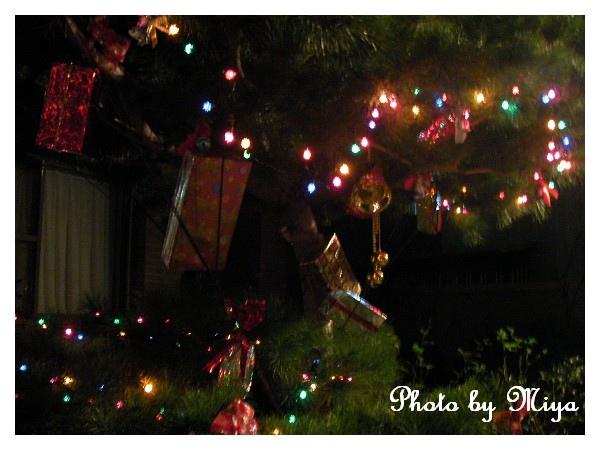 聖誕節SANY0289.jpg