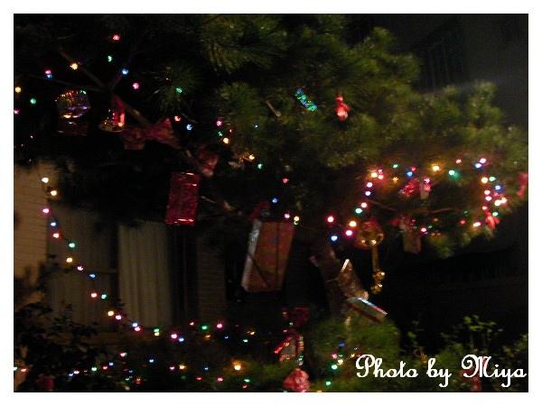 聖誕節SANY0292.jpg