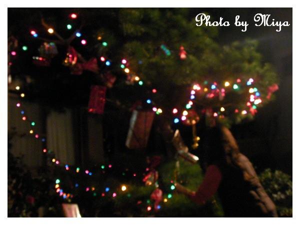 聖誕節SANY0297.jpg