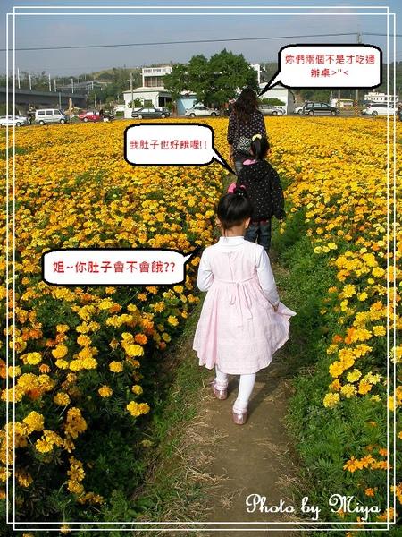 通宵花海SANY0568.jpg
