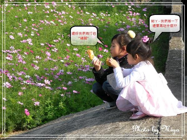 通宵花海SANY0571.jpg