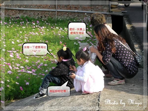 通宵花海SANY0575.jpg