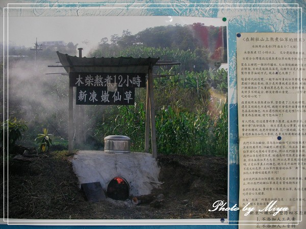 新凍嫩仙草SANY0729.jpg