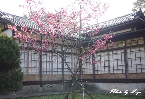 新竹動物園P1040909.jpg