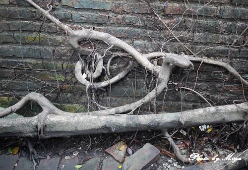 安平樹屋P1020029.jpg
