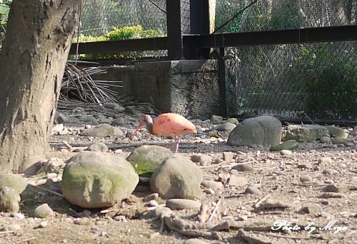 新竹動物園P1040817.jpg