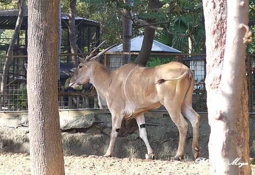 新竹動物園P1040761.jpg