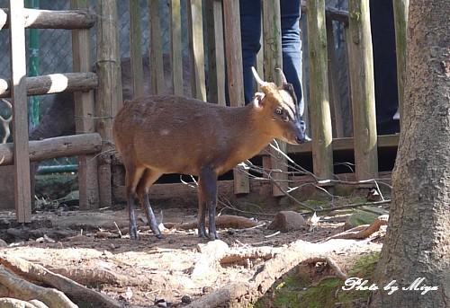 新竹動物園P1040795.jpg