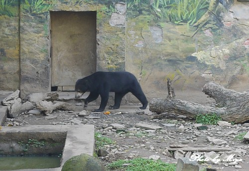 新竹動物園P1040889.jpg