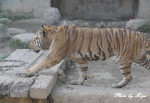 新竹動物園P1040893.jpg
