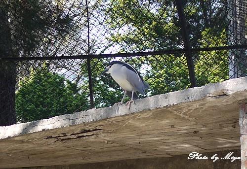 新竹動物園P1040768.jpg