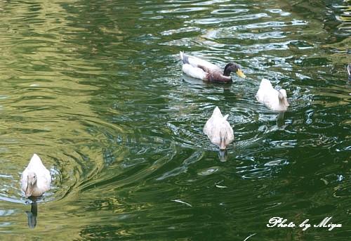 新竹動物園P1040861.jpg