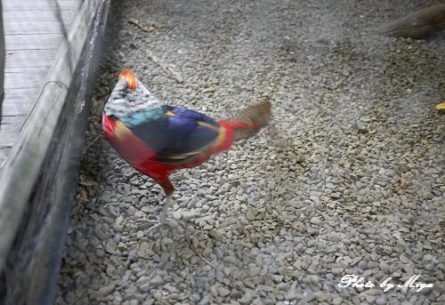 新竹動物園P1040856.jpg
