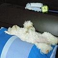 Amy回家後睡的超豪邁