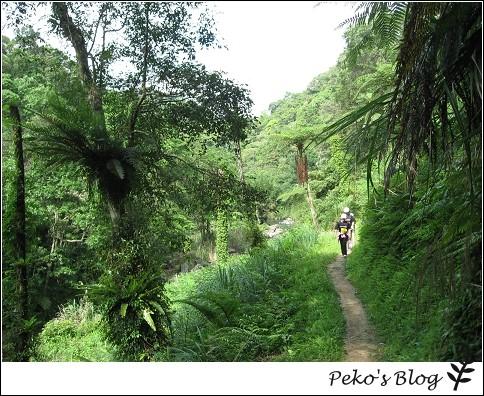 蕨類步道2