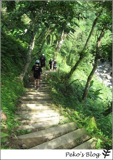 蕨類步道4